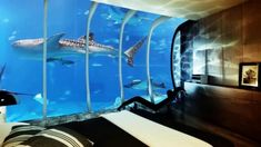 Under Water Hotel - view from hotel room by Pawel Podwojewski. View from under water hotel room. Our hotels will take you to the exciting underwater world. Now you can explore the deep see from a safe and comfortable place. Intelligent technology will give you control over the whole room, including the view outside of the window.