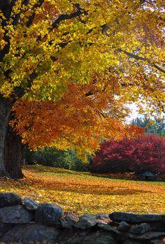 Autumn Yard - Harvard, Massachusetts by Deb Ebbeling, via Flickr