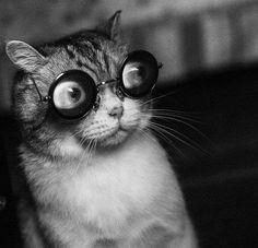 Котики - 3 – 500 фотографий