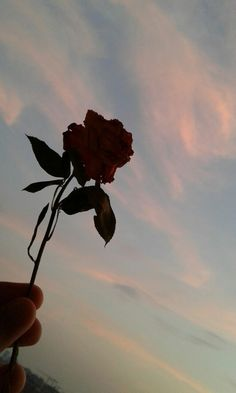 Teray lehjay se kyun laga mujh ko, k tu meray roothnay pe raazi hae? Emoji Wallpaper, Rose Wallpaper, Tumblr Wallpaper, Wallpaper Backgrounds, Aesthetic Pastel Wallpaper, Aesthetic Backgrounds, Aesthetic Wallpapers, Aesthetic Roses, Sky Aesthetic