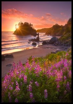 Spring wildflowers on the northern California shore bathed in the warm, luminous light of sunset. Just beautiful, Love the scene!