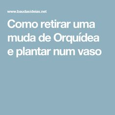 Como retirar uma muda de Orquídea e plantar num vaso White Orchids, Moving Out, Vases, Vegetable Garden, Gardening, Garden, Tips And Tricks, Plants, Flowers