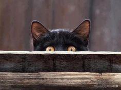 """""""I sees u & am about to pounce u !!"""""""
