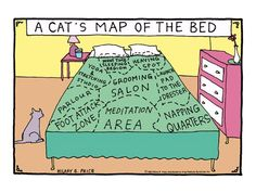 Cat's topography