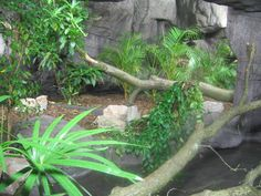 Afbeelding van http://s3.zoochat.com.s3.amazonaws.com/large/burgers_zoo_2-1_001-36302.jpg.