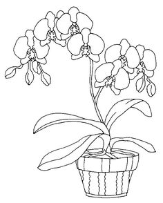 Orchids Coloring Page 10 Wallpaper