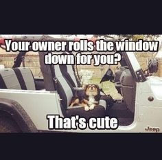 dogs in jeeps - Google Search
