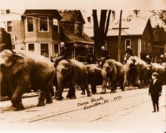 Circus Parade... I feel for these elephants