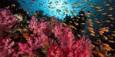 Avaaz - Sauvez nos océans de l'exploitation minière