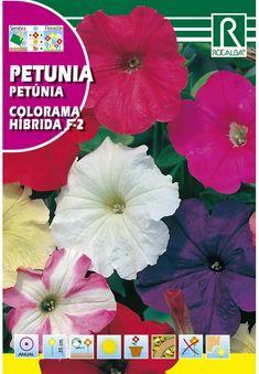 Egynyári virágok : Petunia színkeverék 0,5g Petunias, Pineapple, Fruit, Pine Apple