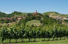 Canale d'Alba, Roero, Piedmont, Italy Piedmont Italy, Vineyard, Spaces, Outdoor, Italia, Outdoors, Vine Yard, Vineyard Vines, Outdoor Games
