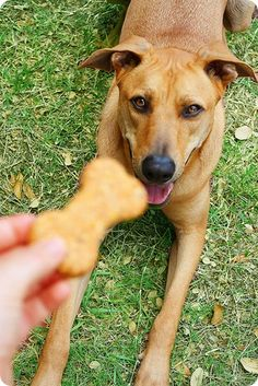 Here's a delicious homemade dog treat recipe that you can make for your favorite four-legged friends