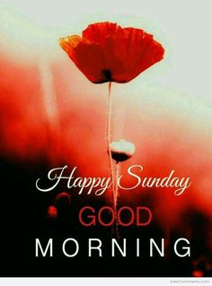 Sunday Good Morning Wishes – Here is Latest Sunday Good Morning Images , Free Good Morning Wallpaper In HD Happy Sunday Messages, Blessed Sunday Quotes, Happy Sunday Images, Sunday Morning Quotes, Sunday Wishes, Sunday Greetings, Sunday Pictures, Good Morning Happy Sunday, Have A Blessed Sunday