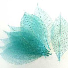 Skeleton leaves turquoise