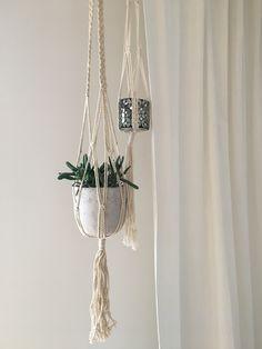 Sukkolentenliebe im Wohnzimmer!