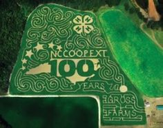 Gross Farms in Lee County joins Cooperative Extension's centennial celebration with 15-acre corn maze cut into the shape of the state centennial logo this fall.