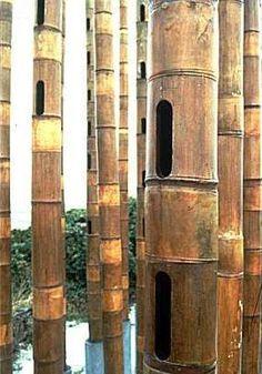 "The Bamboo-Aeolian Organ or the ""weeping bamboo"", Bambus-Aeols-Orgel, orgue éolien en bambou"