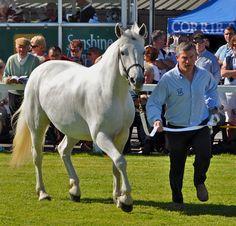 Life in Connemara - Connemara International Pony Show