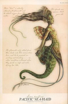 This is what's written in the Arthur Spiderwick's Field Guide to the Fantastical World Around You about the Merpeople. As stunningly gorgeous as they are dangerous, merfolk live in loosely structured kingdoms deep in the sea, but occasionally their natural curiosity causes them to near the shore.