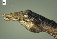 Great use of innovative photography for WWF campaign ....