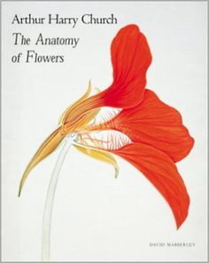 Arthur Harry Church: The Anatomy of Flowers: Amazon.co.uk: A.H. Church, David J. Mabberley: 9781858941165: Books