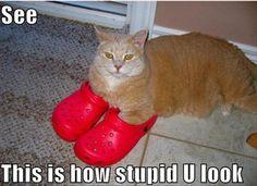 croc kitty