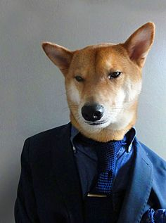 Hipster Dawg | The Style Council