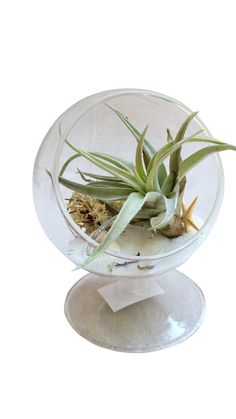 White Circle Airplant Terrarium