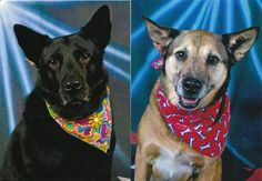Bonded senior dogs left behind after sudden death of their owner