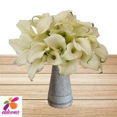 Mini Callas White Pack 80 Stems- EbloomsDirect – Eblooms Farm Direct Inc. Types Of Flowers, Fresh Flowers, White Flowers, Bulk Flowers Online, Classic Romantic Wedding, Calla Lily Flowers, Oriental Lily, Delphinium, Indoor Plants