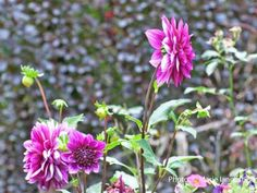 What to Do in the Garden in September: September should bring relief to gardens in the Northern Hemisphere and signal the start of a new season for gardeners in areas that have been too warm for anything but hothouse tropicals, as well as southern hemisphere gardeners.