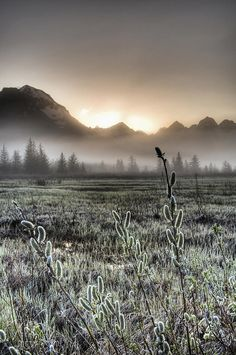 ✯ Morning Fog Hangs On The Ground