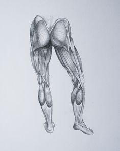 Megan McDonald Art & Design – Leg Muscle Drawings