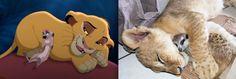 Les animaux Disney dans la vraie vie