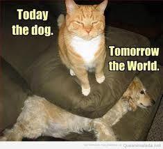Hoy el perro mañana el mundo