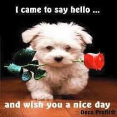 Such a sweet way to say hello. Good Morning Puppy, Good Morning Wednesday, Good Morning Prayer, Good Morning Friends, Funny Good Morning Messages, Cute Good Morning Images, Good Day Wishes, Hug Quotes, Good Day Quotes