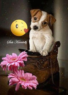 El Jardín de las rosas Hermosas Good Morning Love Gif, Good Morning Sunshine, Good Morning Quotes, Morning Pictures, Morning Images, Bonjour Gif, Love You Gif, Good Night Sweet Dreams, Good Morning Greetings