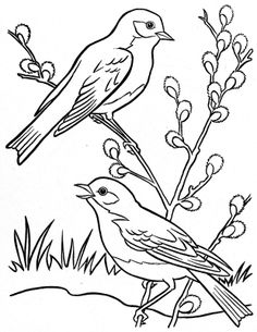Coloring Book~Springtime Welcome – Bonnie Jones – Webová alba Picasa Outline Drawings, Bird Drawings, Animal Drawings, Easy Drawings, Bird Embroidery, Hand Embroidery Designs, Bird Coloring Pages, Coloring Books, Vogel Quilt
