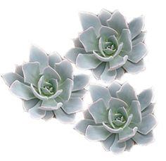 Silver Flowers | Buy Silver Flowers Online | Silver Rose | Silver Thistle Order Flowers, Flowers Online, All Flowers, Silver Flowers, Wedding Flowers, Black Succulents, Succulents For Sale, Pink Succulent, Wholesale Succulents