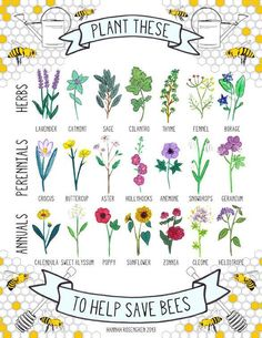 Bee-friendly flowers for your yard.