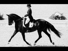 The Magnificent Sport Of Horseback Riding Dressage