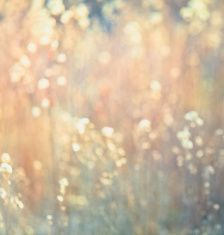 Dreamy Abstract Nature Background - Square Composition & Earth Tones stock photo