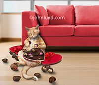 A funny, happy and fat cat has stuffed himself with Valentine Day chocolates from heart-shaped candy boxes in an image made for a humorous Valentine's card.