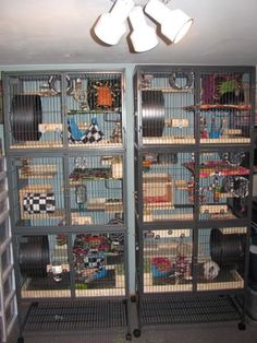 New cages are finished! - Chins & Hedgies
