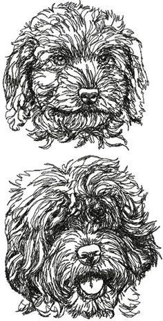 Advanced Embroidery Designs - Labradoodle Set