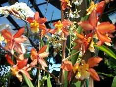 Orchids, Orchids, Orchids.....  http://www.facebook.com/pages/American-Plant/111708498851820?ref=tn_tnmn  http://www.americanplant.net/index.php