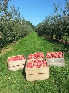 Waters Orchard in Germantown, MD. Has pick your own apples only. Pick Your Own Apples, Strawberry, Pumpkin, Places, Pumpkins, Strawberry Fruit, Squash, Strawberries, Lugares