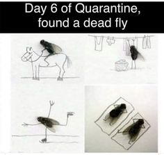 Day six of quarantine: found a dead fly 😂 Stupid Funny Memes, Funny Relatable Memes, The Funny, Funny Stuff, Funny Comebacks, Hilarious Quotes, Funny Shit, Cartoon Jokes, Wedding Humor