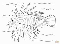 83 Best Lionfish Images On Pinterest