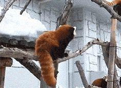 Poke! Nope wasn't me…